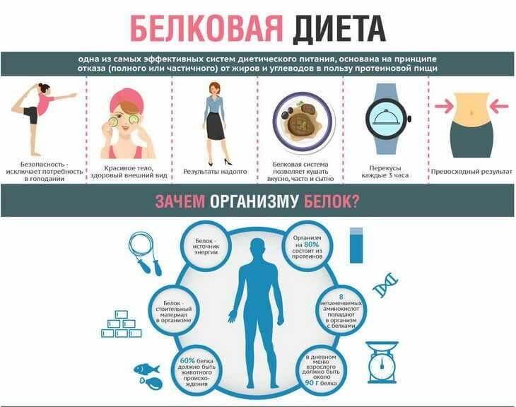 Принципы белковой диеты