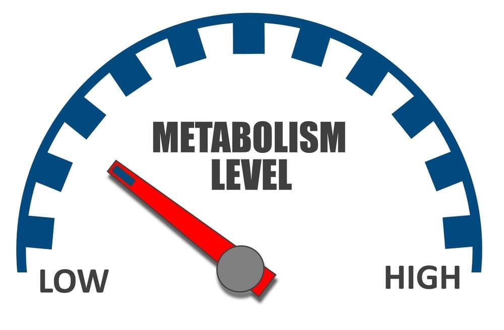 сжигание жира метаболизм ведьма