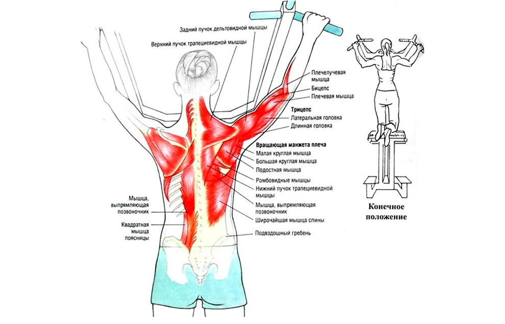 Упражнения для спины в тренажере для подтягивания с противовесом