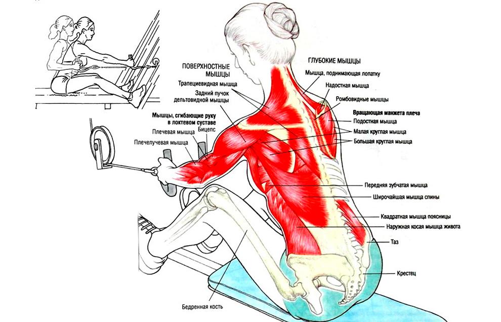 Тяга горизонтального блока к поясу полезна для спины