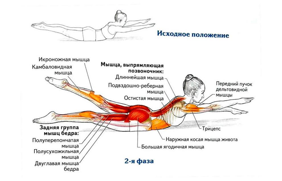 Техника выполнения упражнения «Супермен»