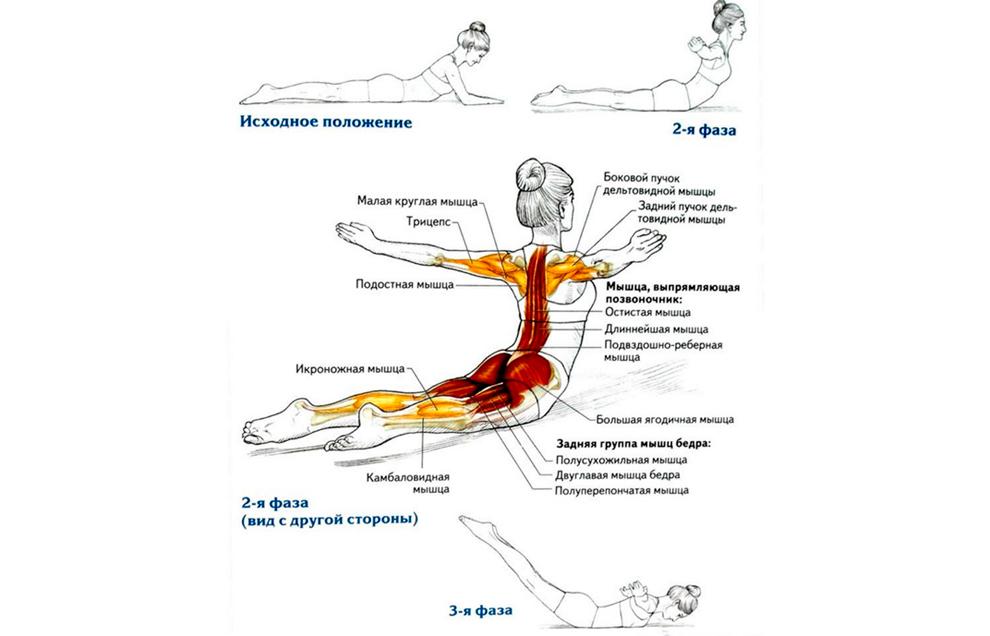 Упражнение для осанки – «Ныряющий лебедь»