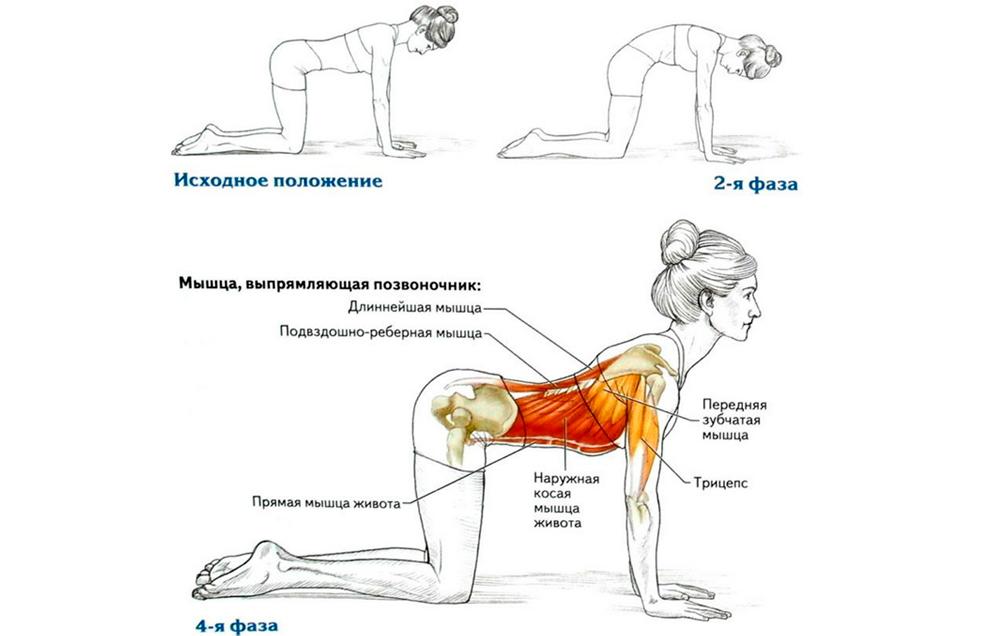 Укрепление мышц спины и пресса с помощью упражнения «Кошка»