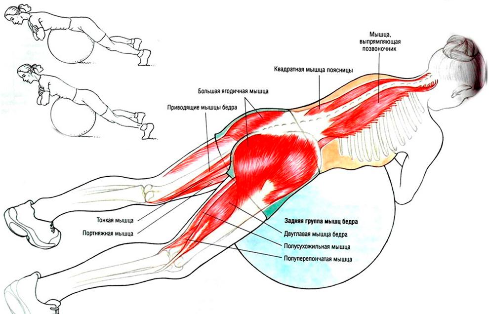 Упражнение для спины с фитболом