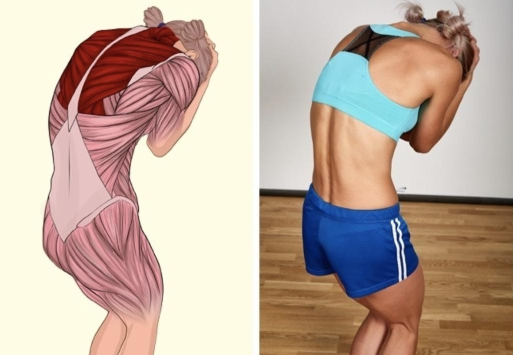 Упражнения для растяжки мышц спины