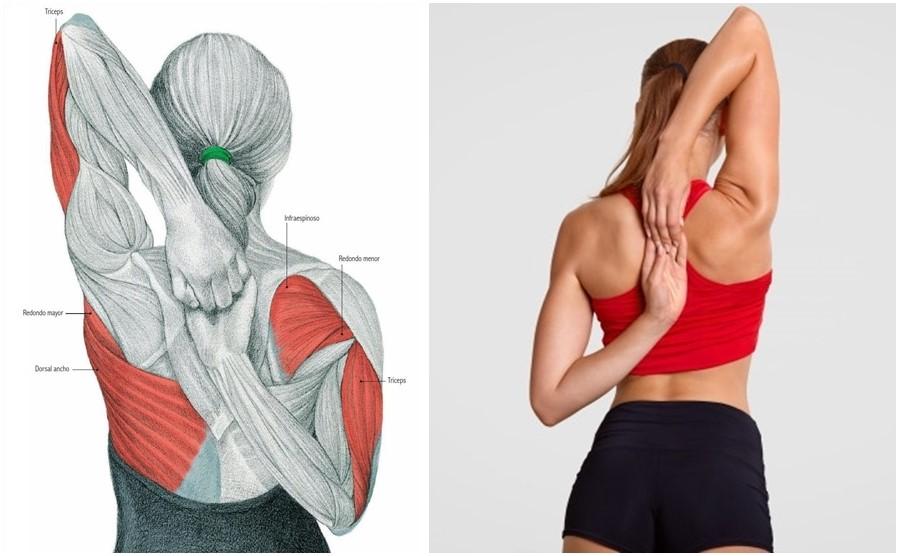 Упражнения для растяжки плечевого пояса и рук