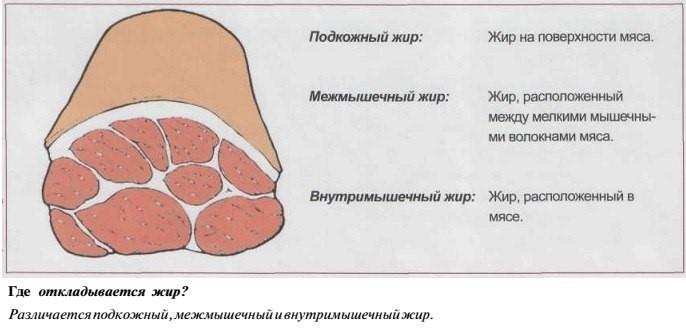 Причины появления жира на ногах