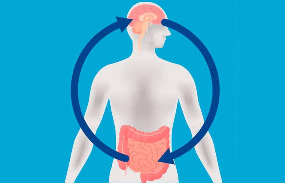 Связь между набором веса и микробиомом кишечника